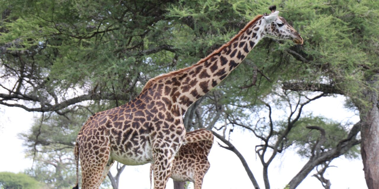 https://www.kilingeadventures.com/wp-content/uploads/2020/11/5-days-big-5-safari-1280x640.jpg