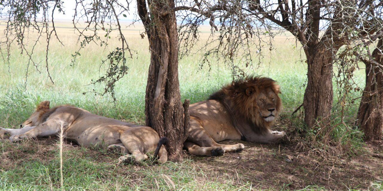 https://www.kilingeadventures.com/wp-content/uploads/2020/11/5-days-complete-southern-safari-1280x640.jpg