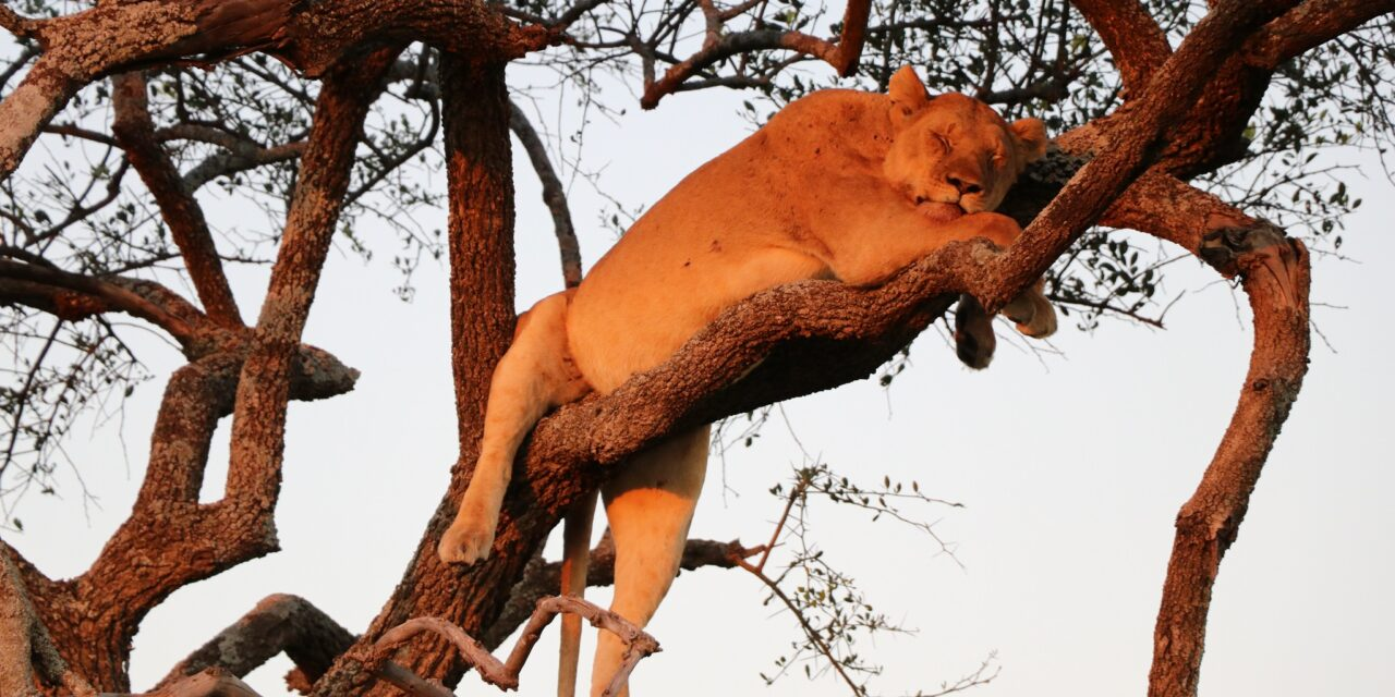 https://www.kilingeadventures.com/wp-content/uploads/2020/11/6-days-unforgettable-safari-1280x640.jpg
