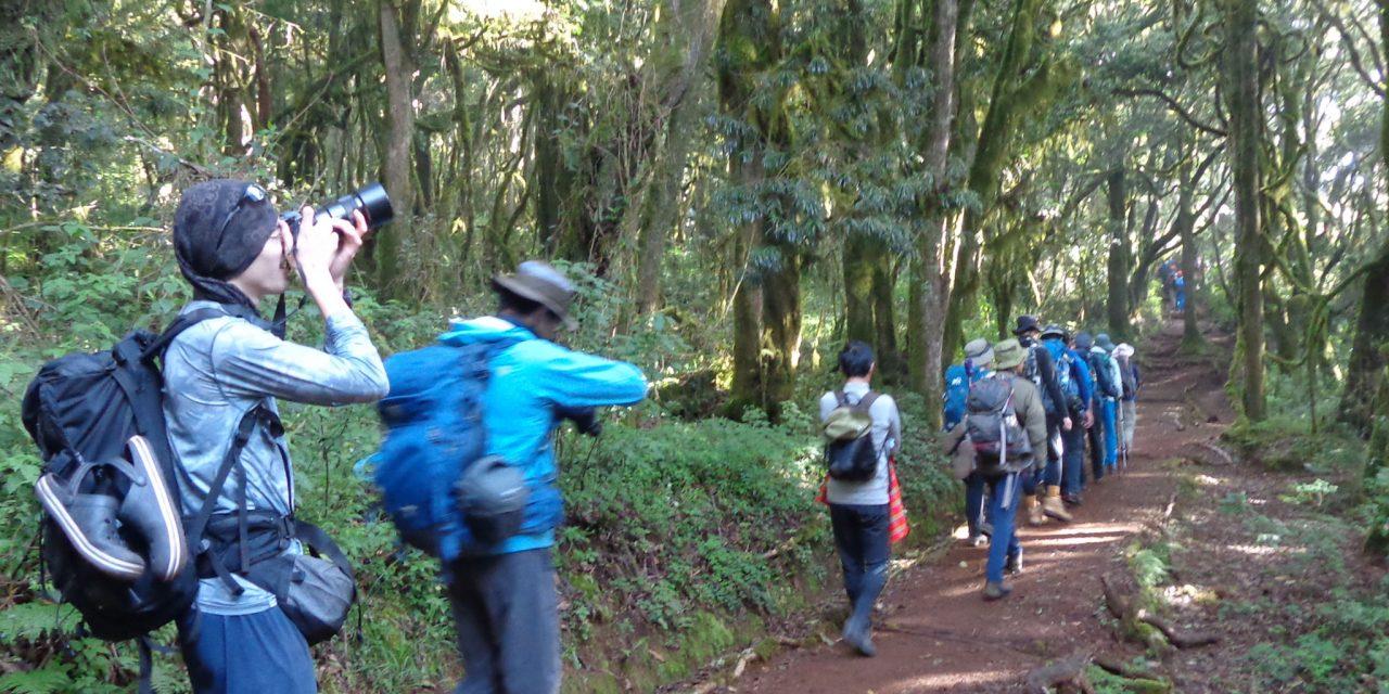 https://www.kilingeadventures.com/wp-content/uploads/2021/01/1-Day-Kilimanjaro-hike-via-Marangu-Route-1280x640.jpg