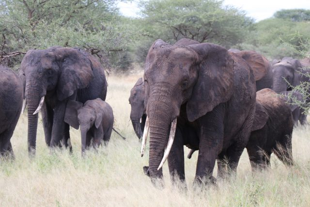 Recommended Tanzania Tour Destinations